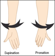 Muscu pronation